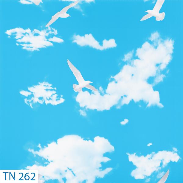 TN 262